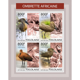 OMBRETTE AFRICAINE